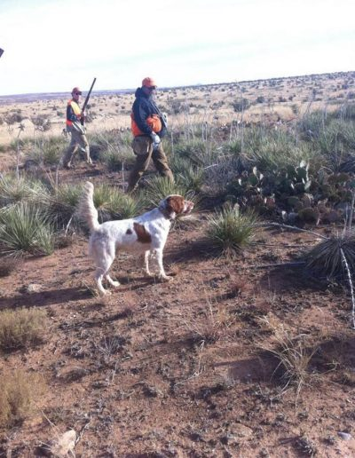 straigh_line_outfitters_dog