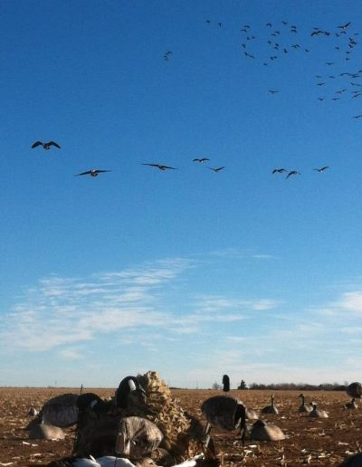 straigh_line_outfitters_geese3